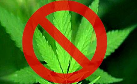 20121022164724-rechazan-legalizacion-marihuana-california-morelia-michoacan-20102010110320101103.jpg