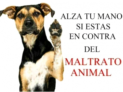 20141110200502-el-maltrato-animal-phixr.png