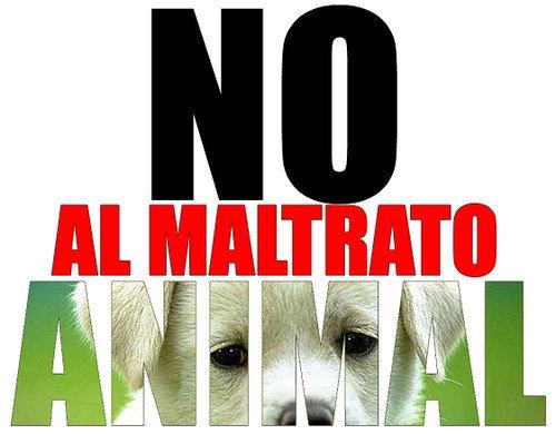 20141112185146-maltrato-animal.jpg