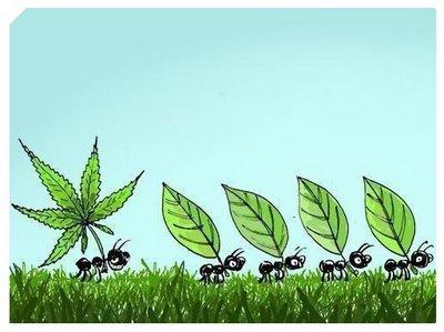 20121025185723-hoja-marihuana.jpg
